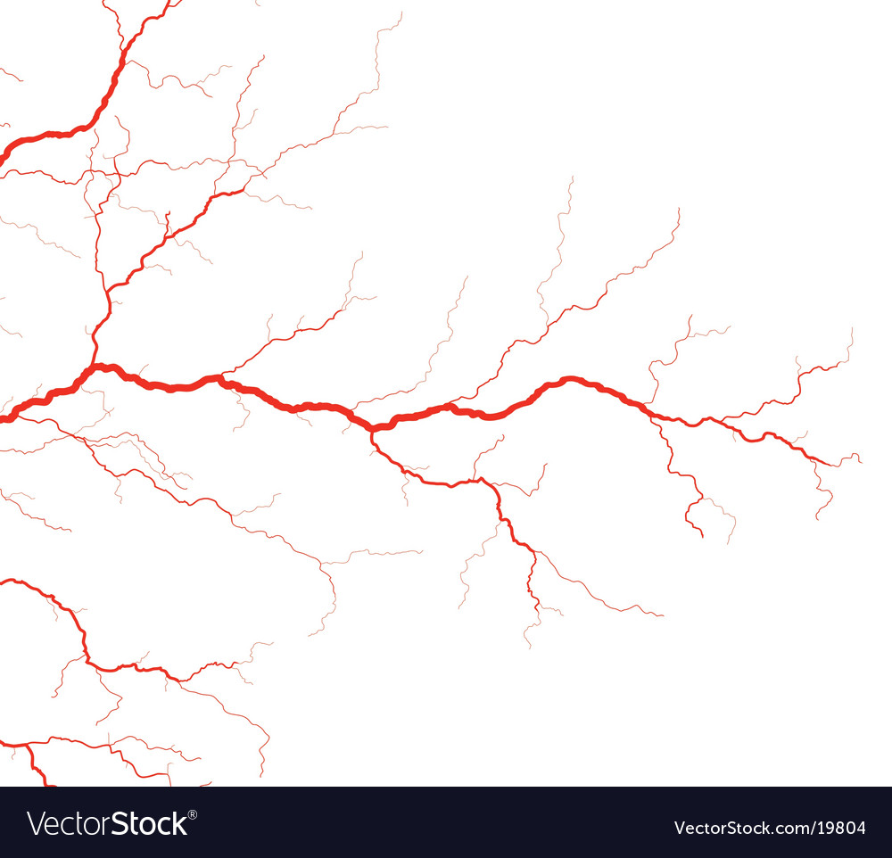 Veins vector | Price: 1 Credit (USD $1)