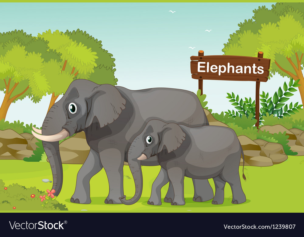 Two elephants with a wooden sign board at the back vector | Price: 1 Credit (USD $1)