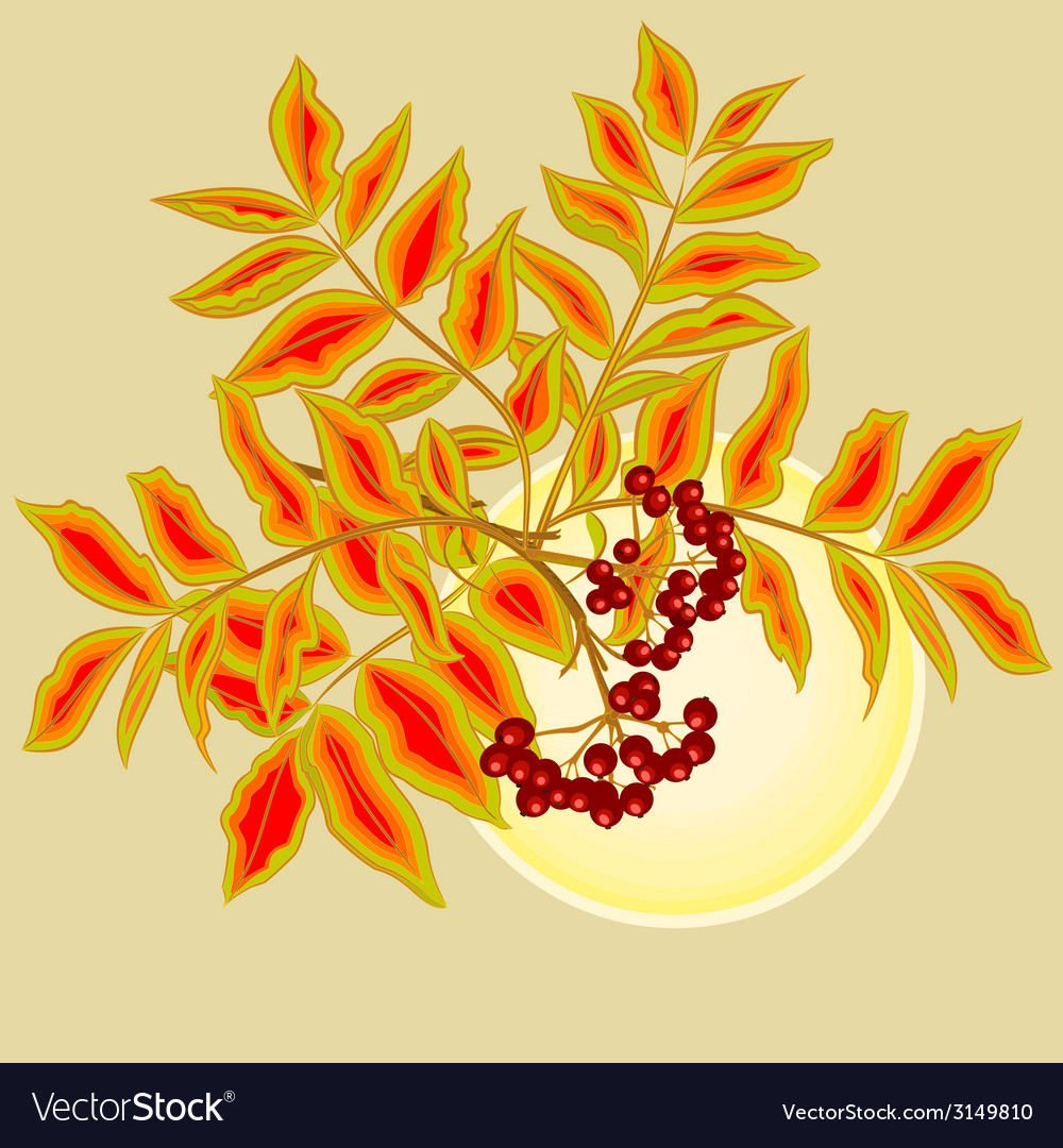 Twig rowanberry with leaves and berries and sun vector | Price: 1 Credit (USD $1)
