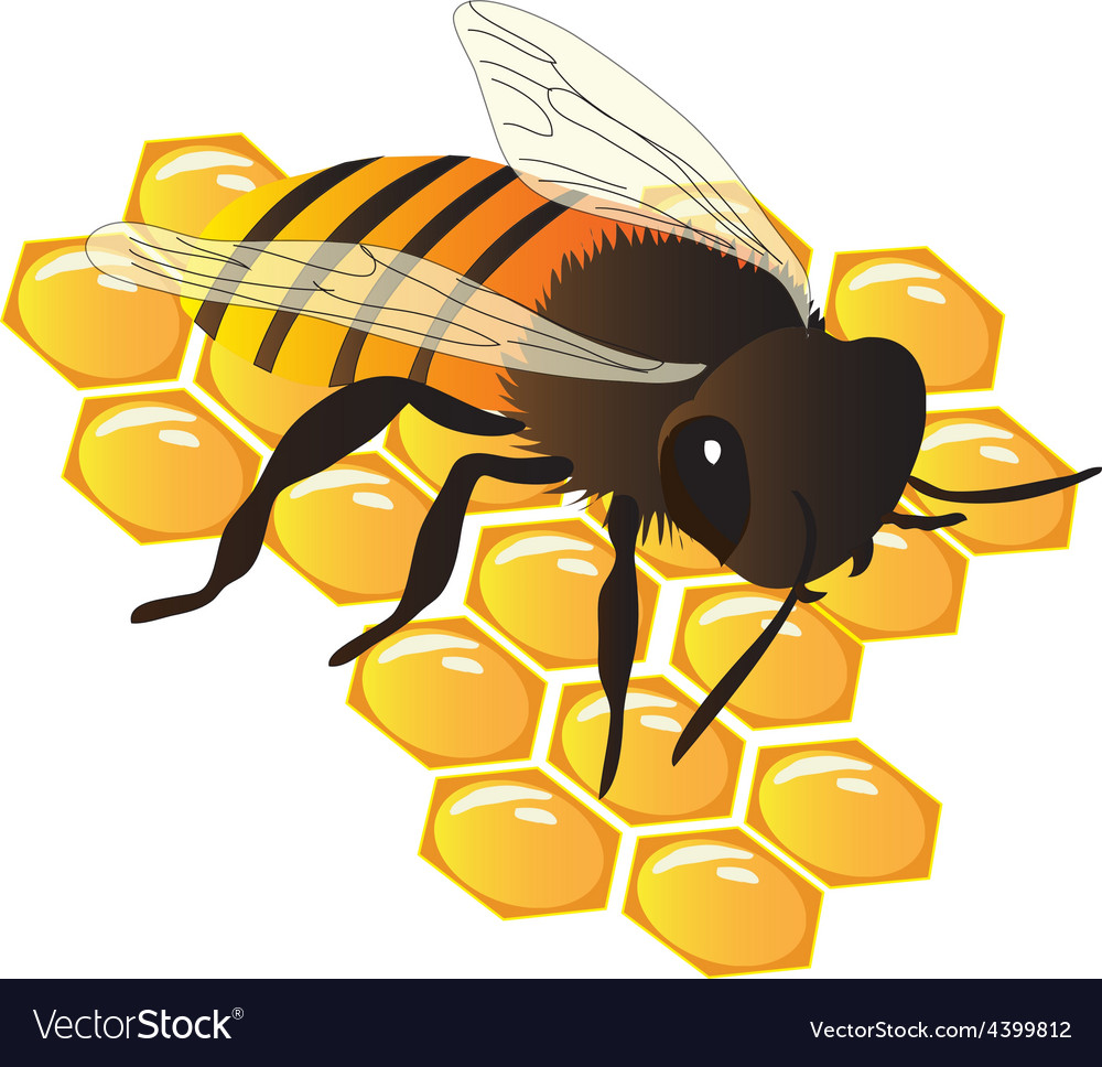 Bee on hive vector | Price: 1 Credit (USD $1)