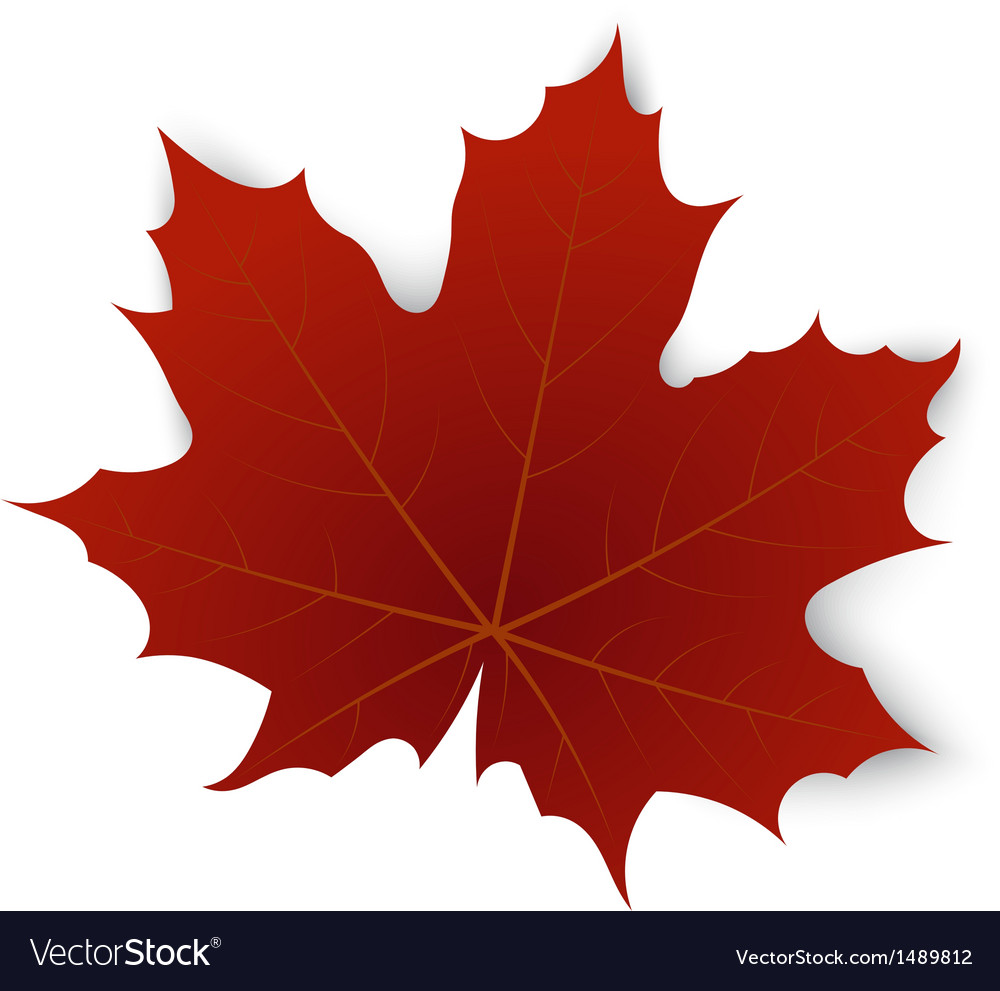 Red maple leaf on a white background vector | Price: 1 Credit (USD $1)