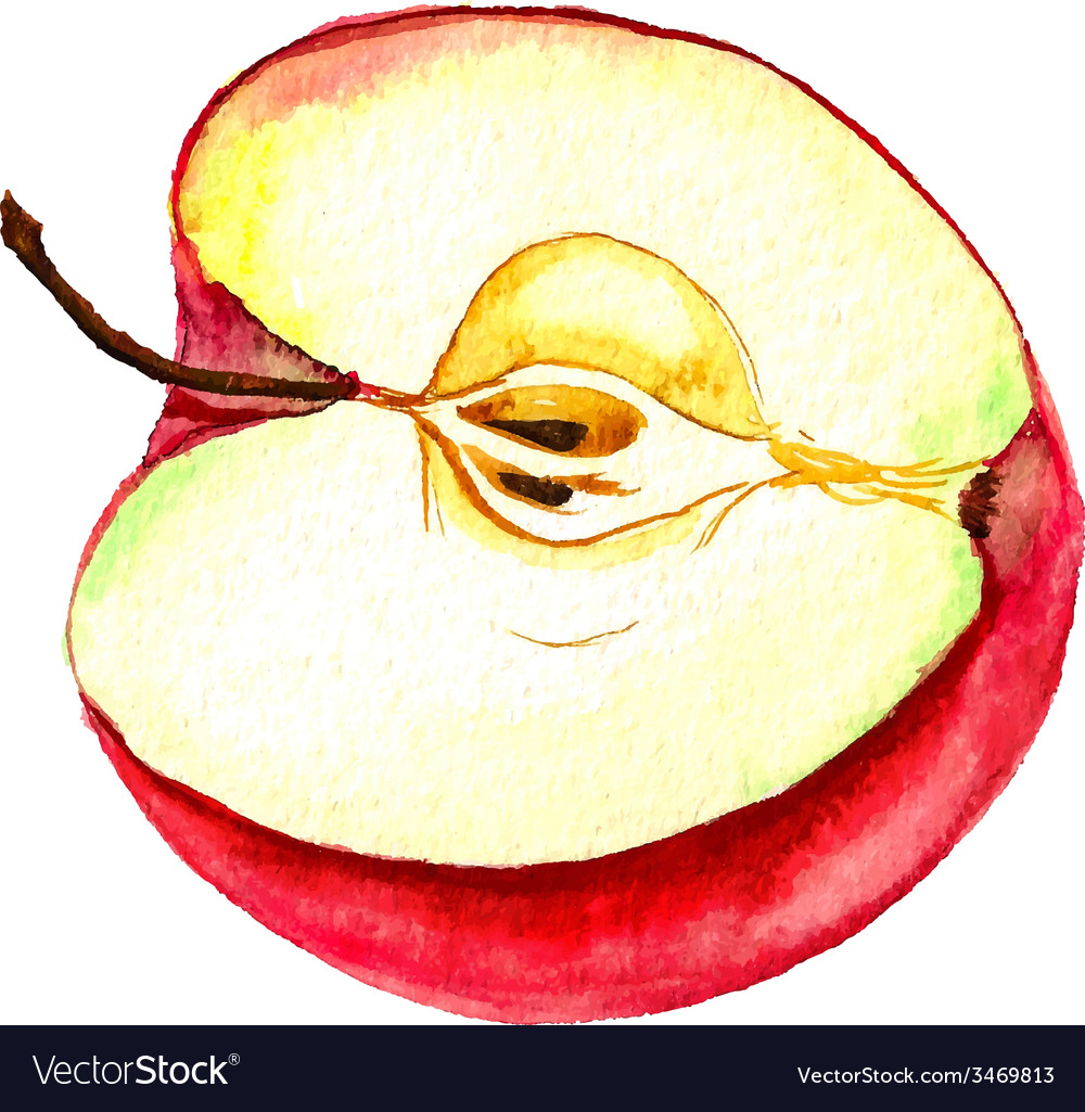 Half of apple vector | Price: 1 Credit (USD $1)