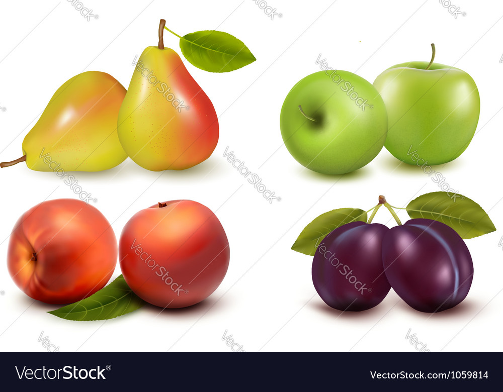 Set of fresh fruit vector | Price: 1 Credit (USD $1)