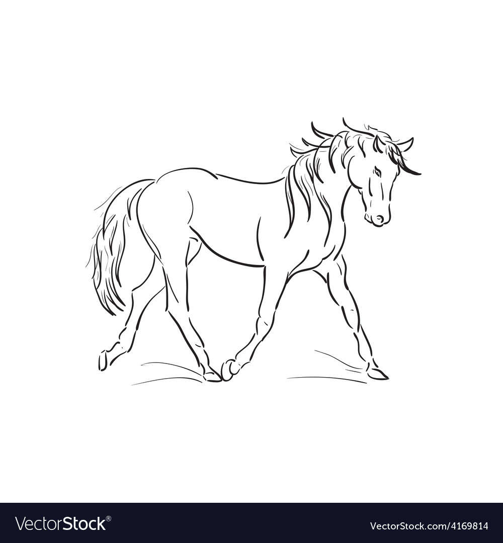 Sketch of running horse vector | Price: 1 Credit (USD $1)