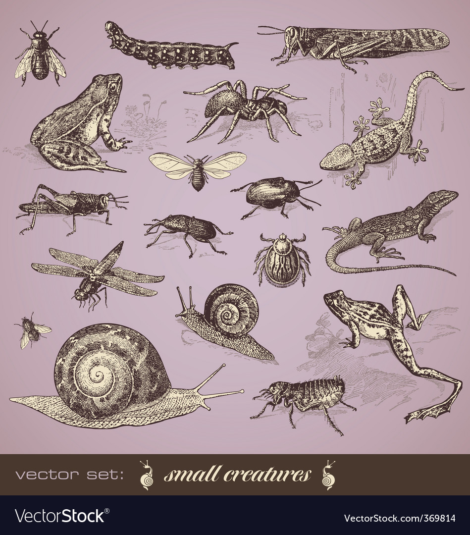 Small creatures vector | Price: 3 Credit (USD $3)