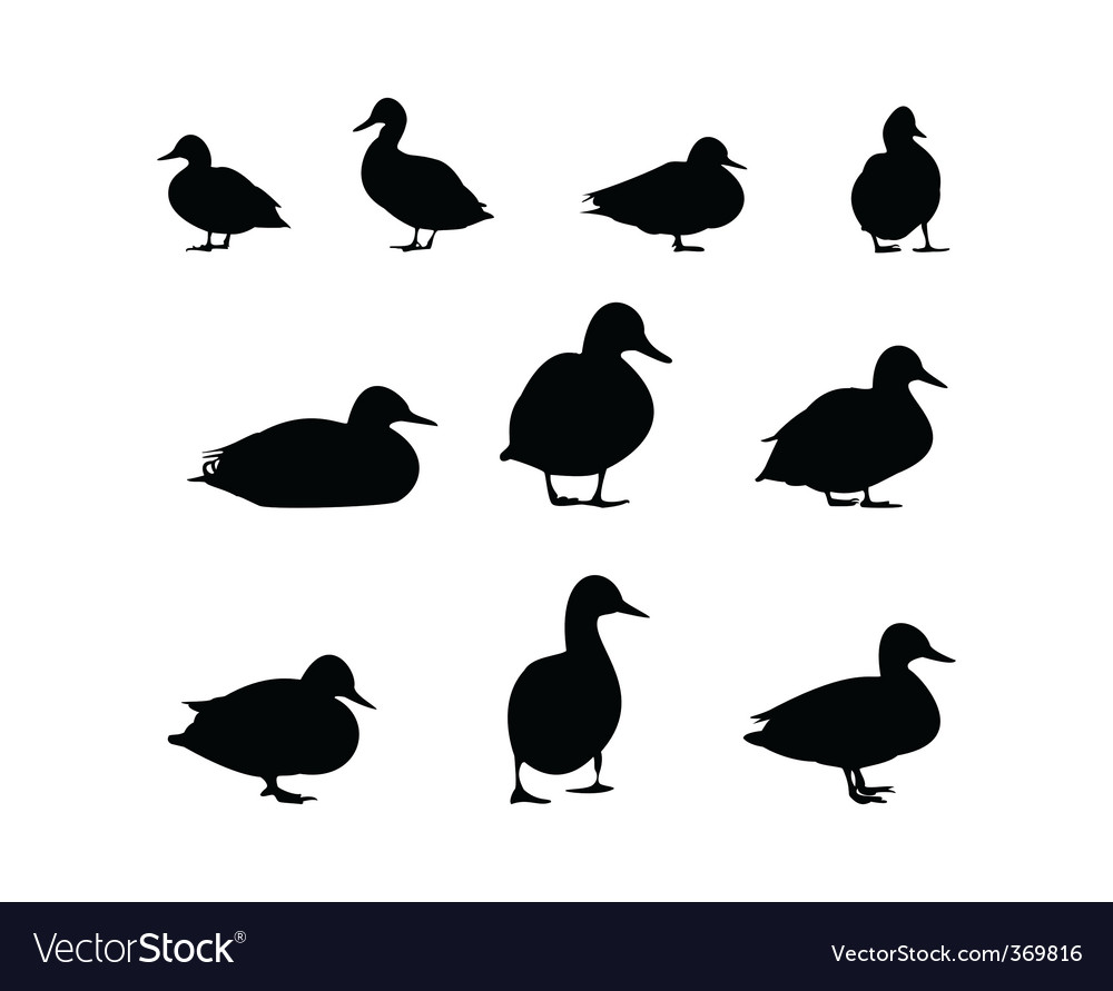Ducks vector | Price: 1 Credit (USD $1)