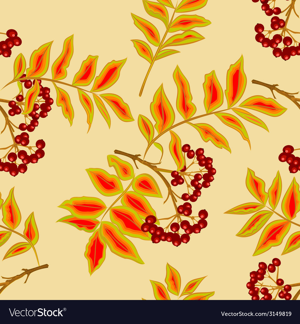 Seamless texture twig rowanberry vector | Price: 1 Credit (USD $1)
