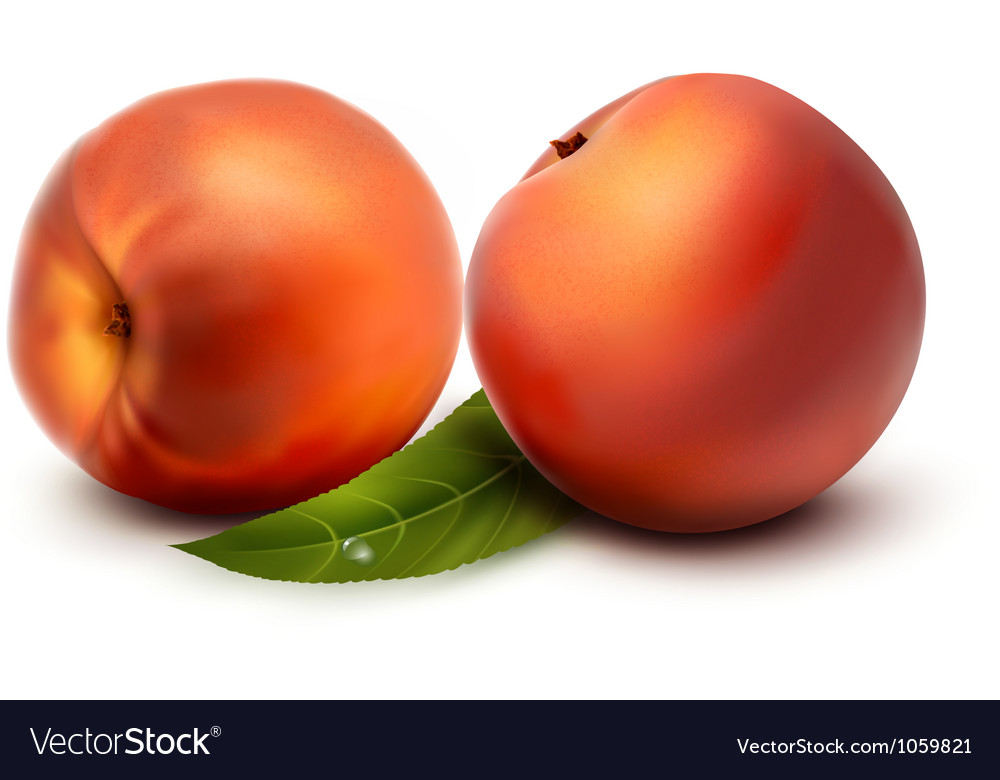 Two fresh peach vector | Price: 1 Credit (USD $1)