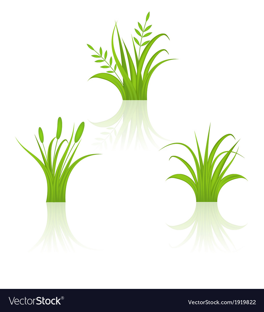 Set green grass isolated on white background vector | Price: 1 Credit (USD $1)