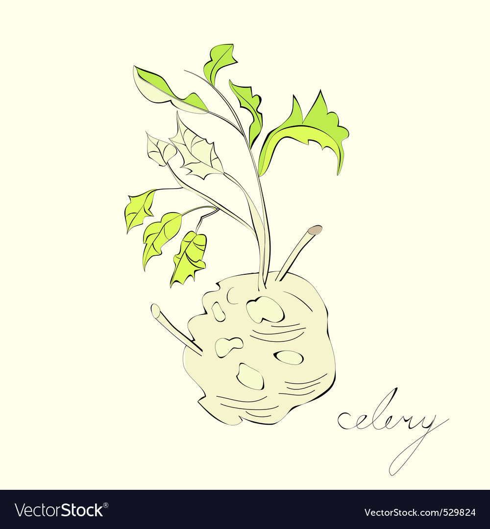Illustration with celery with root leaf vector | Price: 1 Credit (USD $1)