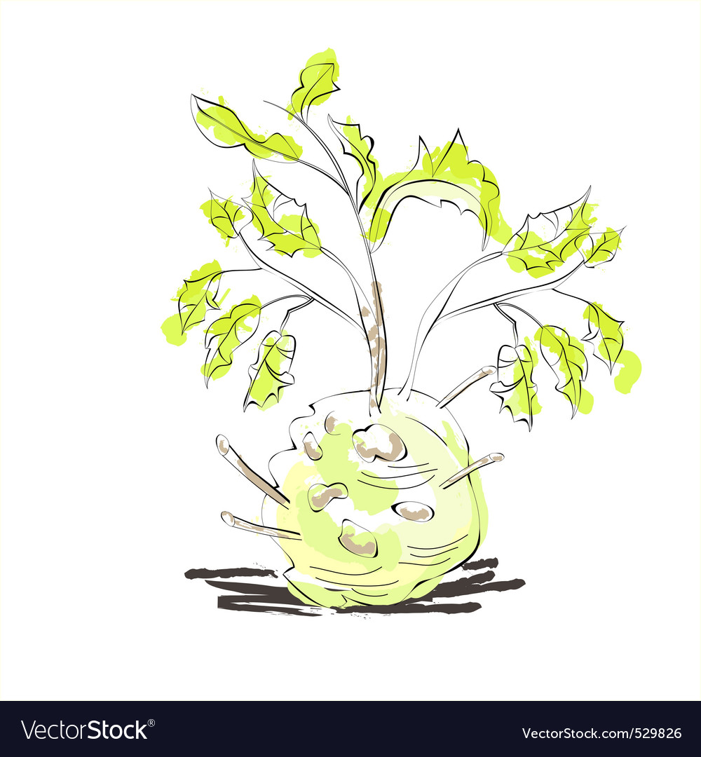 Illustration of celery with root leaf vector