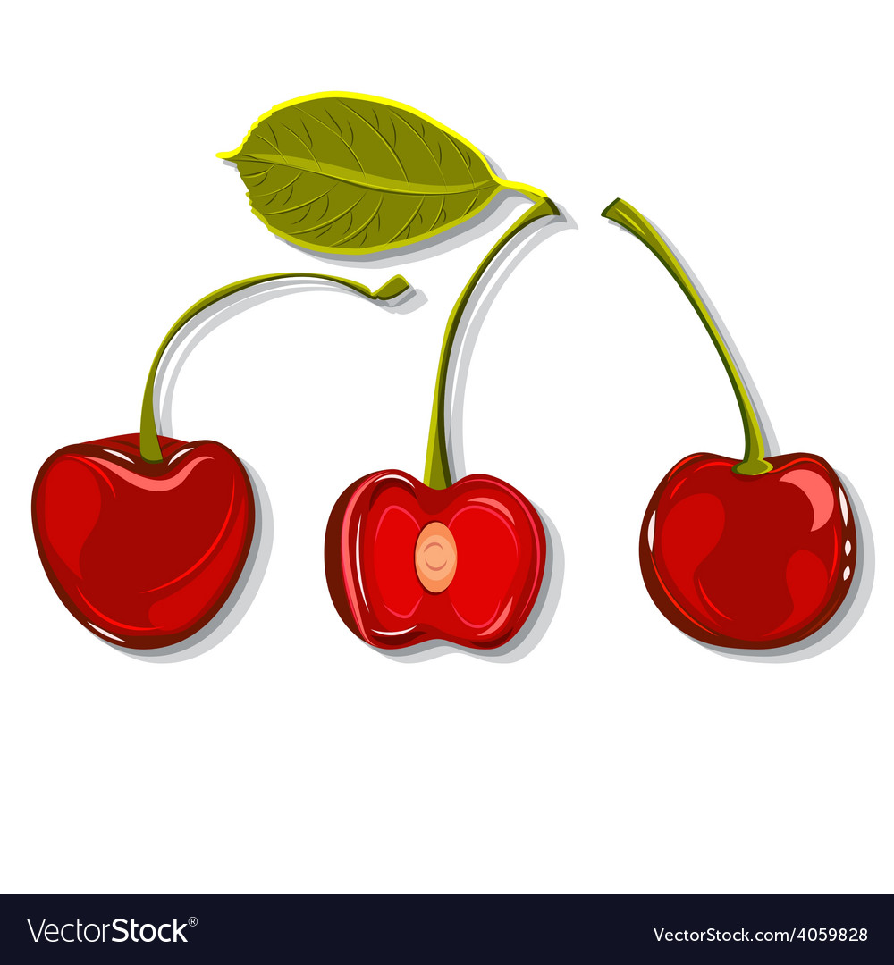 Hand-drawing juicy cherries vector | Price: 1 Credit (USD $1)