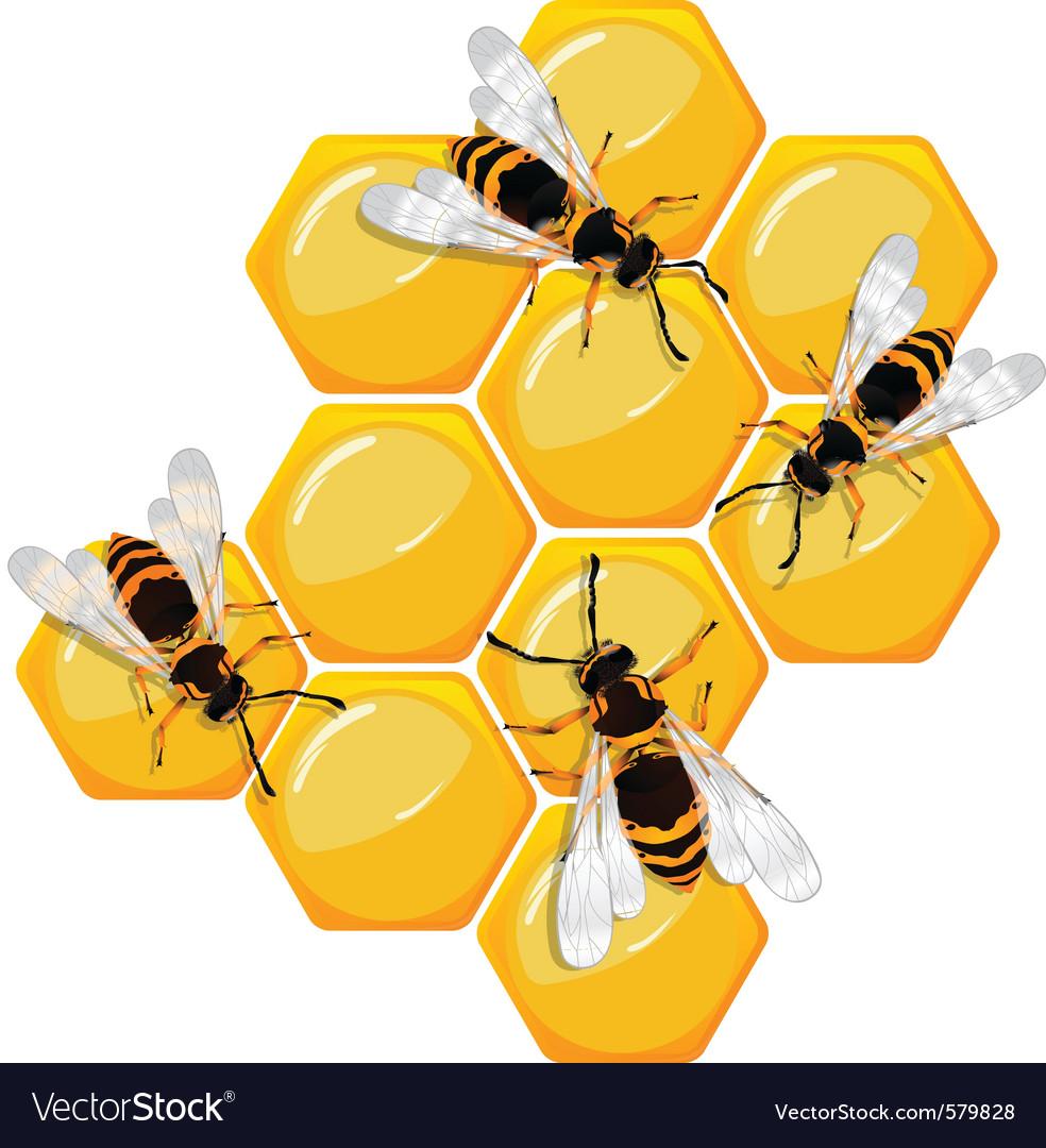 Honeycomb vector   Price: 1 Credit (USD $1)