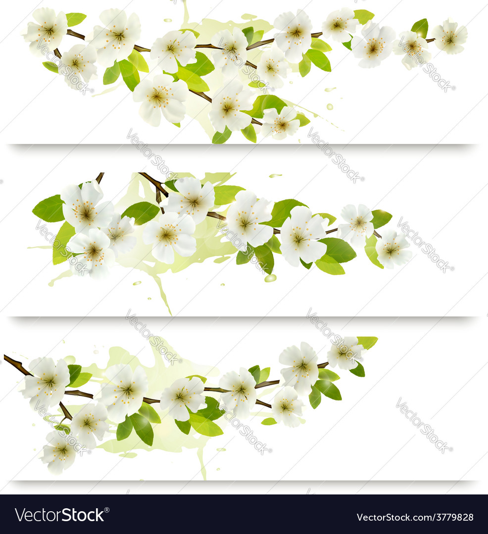 Three spring banners with blossoming tree brunch vector | Price: 3 Credit (USD $3)