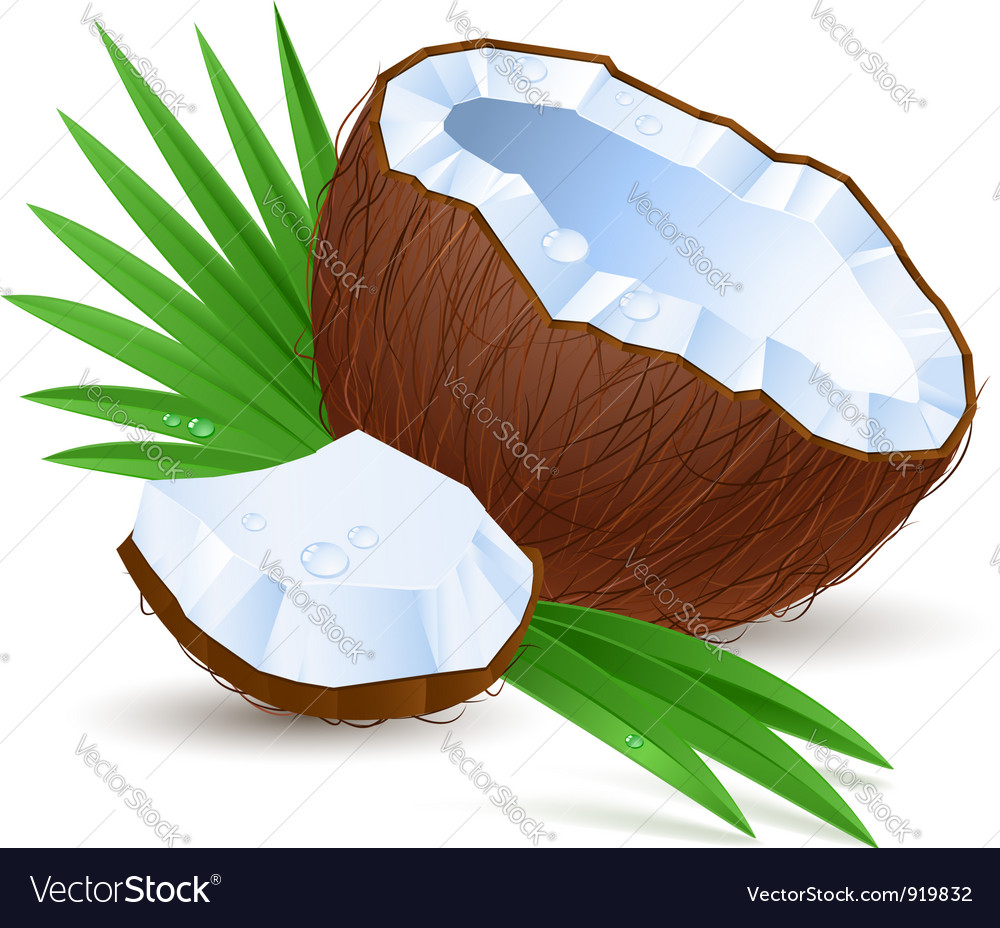 Half a coconut vector | Price: 1 Credit (USD $1)
