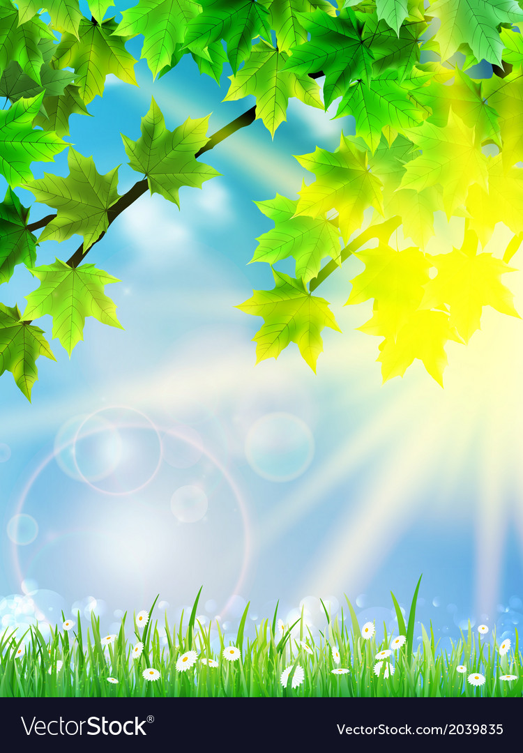 Eco background - green leaves grass bright sun vector | Price: 1 Credit (USD $1)