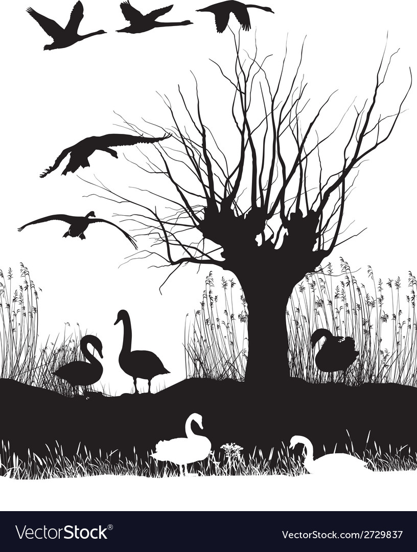 Swans on the shore vector | Price: 1 Credit (USD $1)