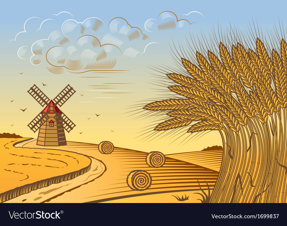 Wheat fields landscape vector | Price: 1 Credit (USD $1)