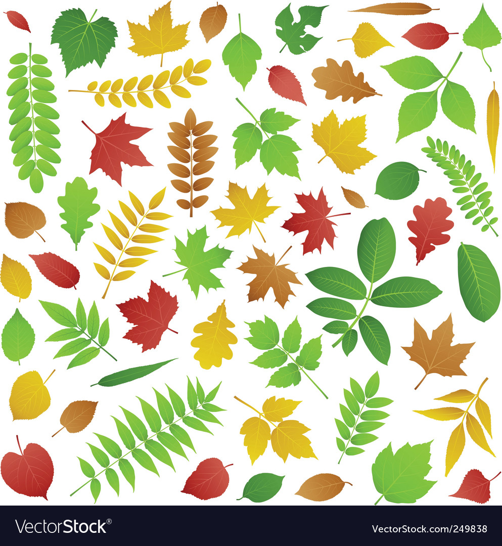 Collection of autumn leaves vector | Price: 1 Credit (USD $1)