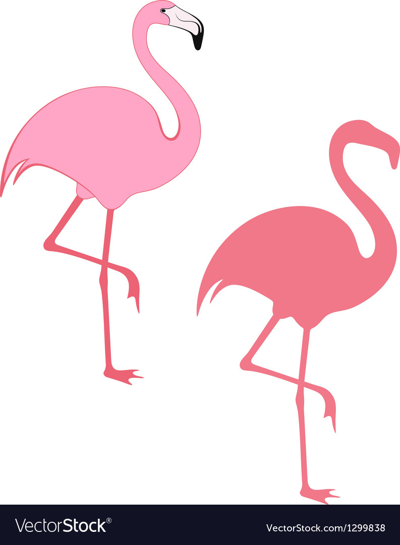 Flamingo vector | Price: 1 Credit (USD $1)