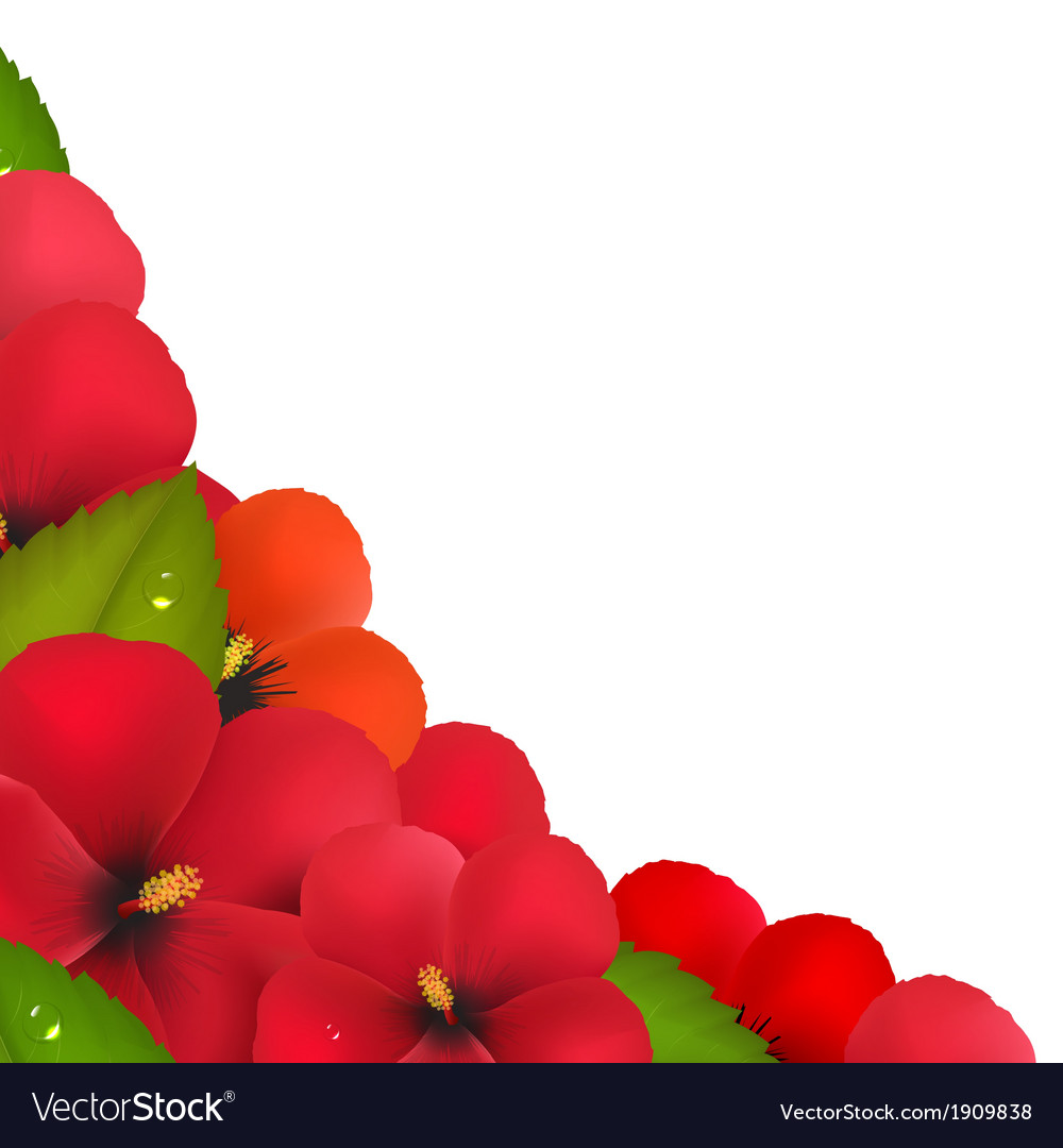Red hibiscus flowers with leaf border vector | Price: 1 Credit (USD $1)