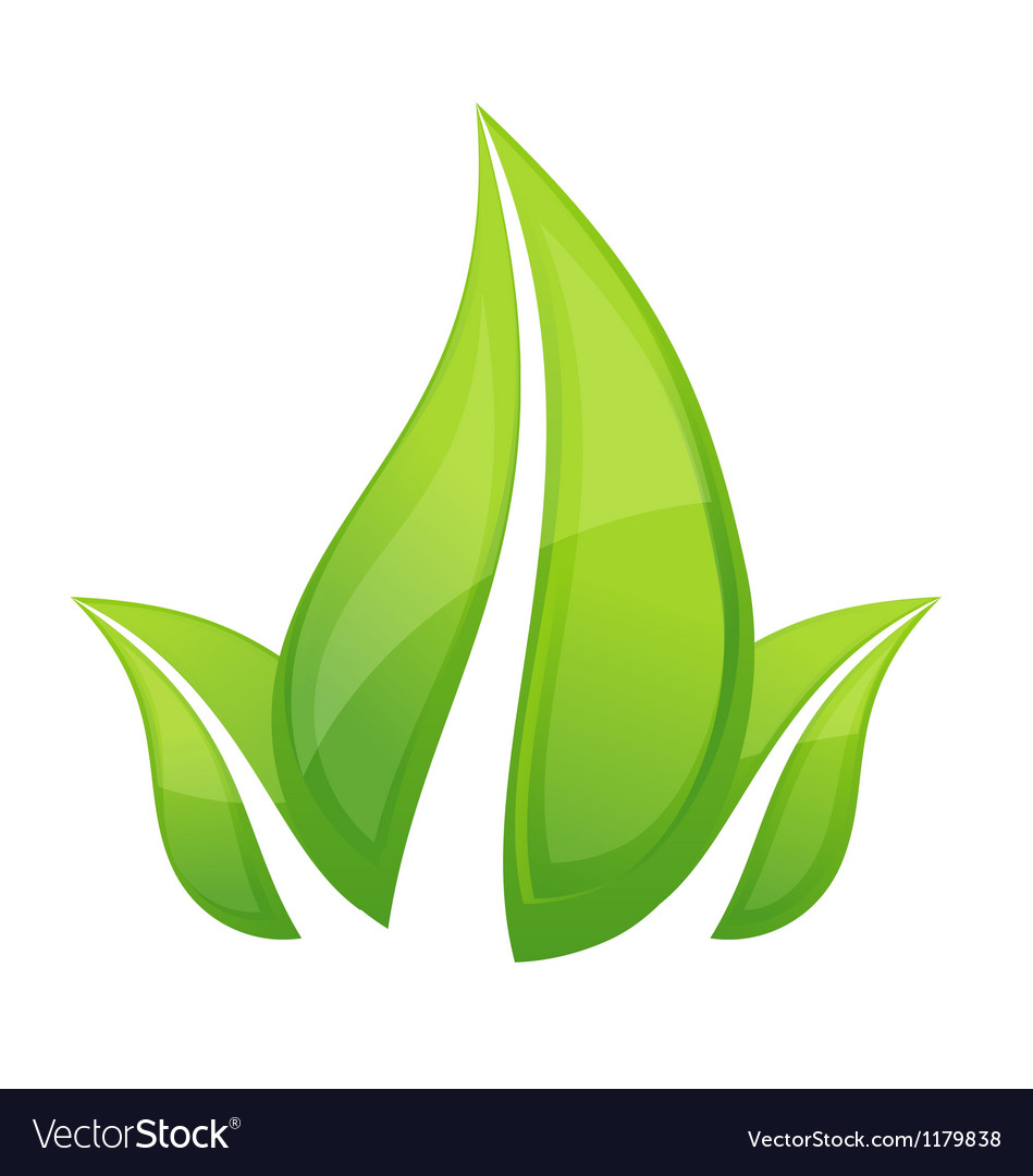 Shiny nature leafs symbol green color vector | Price: 1 Credit (USD $1)
