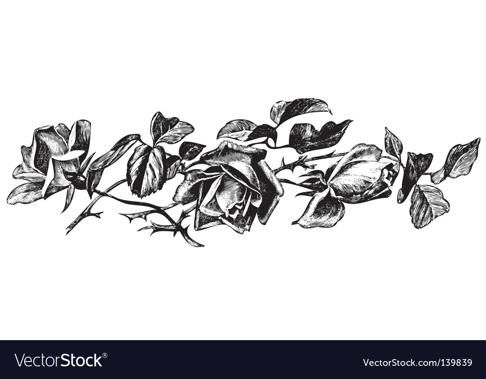 Antique roses engraving vector | Price: 1 Credit (USD $1)