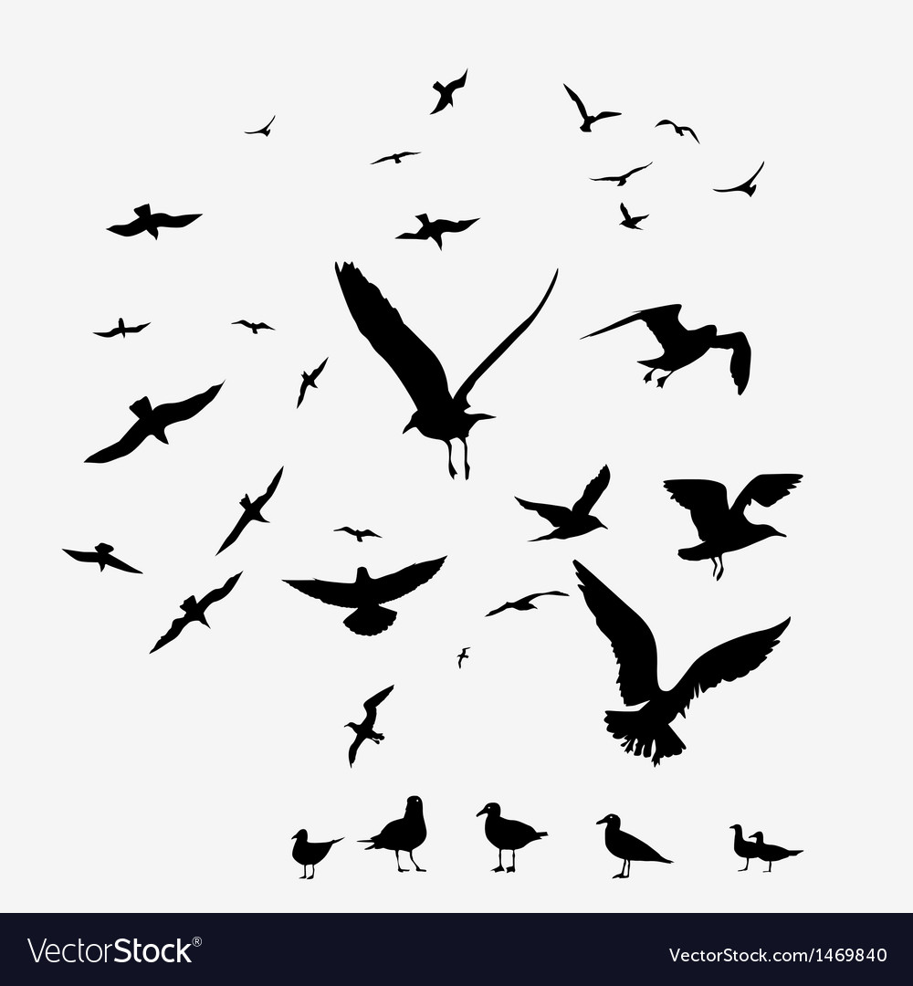 Pack of seagulls vector | Price: 1 Credit (USD $1)