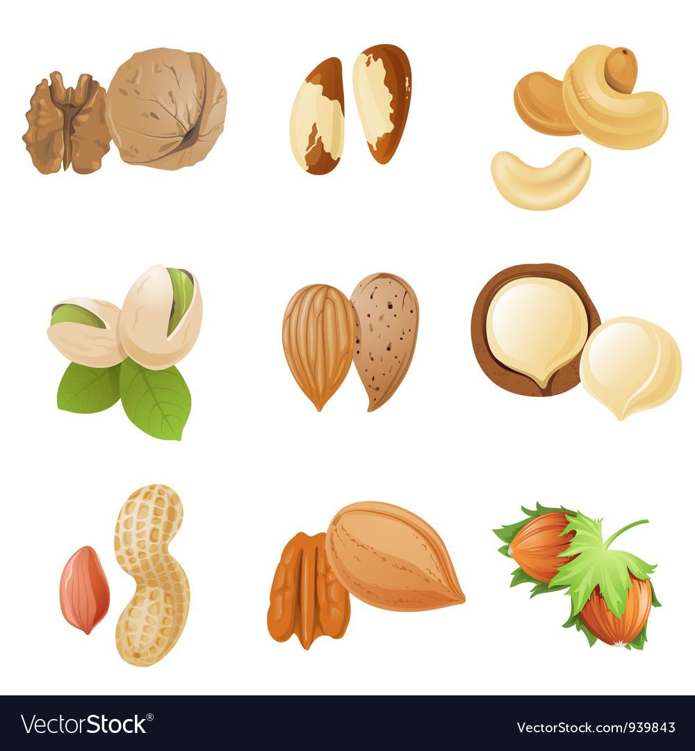 Nuts vector | Price: 1 Credit (USD $1)