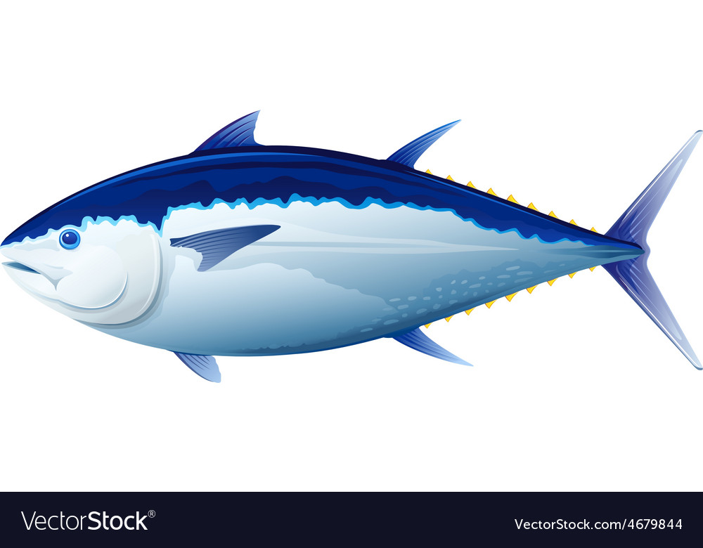 Bluefin tuna fish vector | Price: 1 Credit (USD $1)