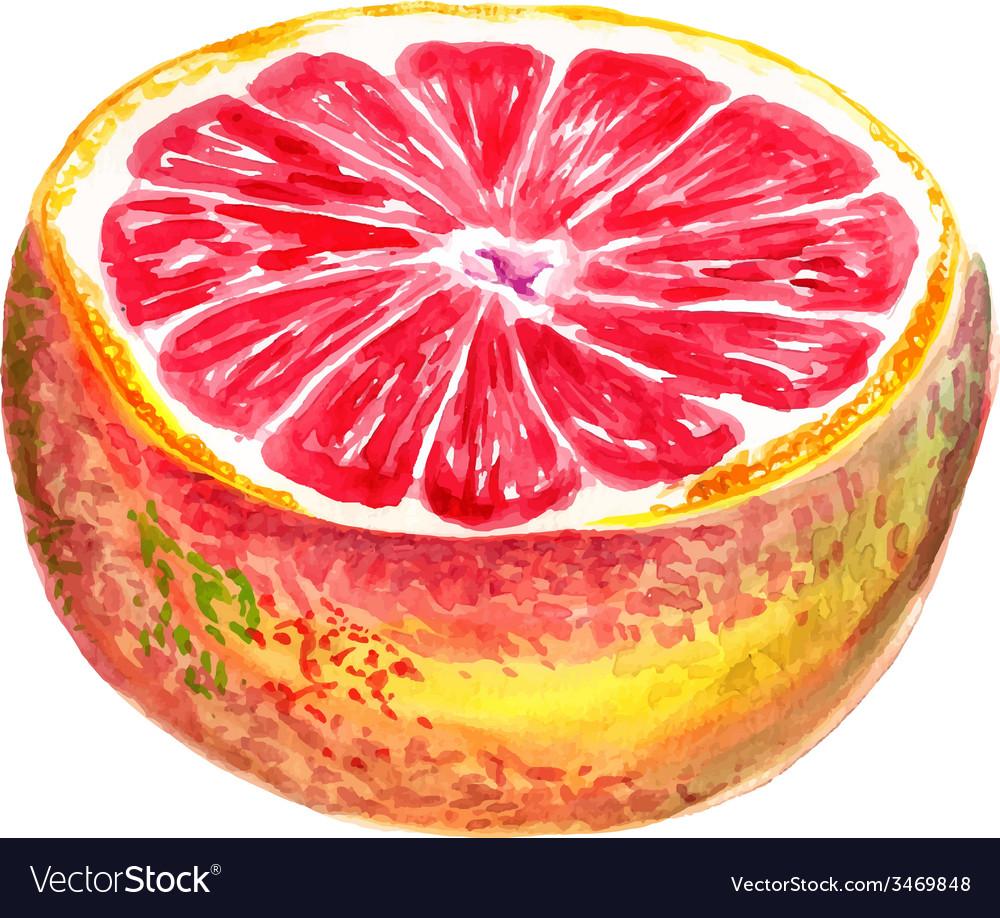 Half of grapefruit vector   Price: 1 Credit (USD $1)