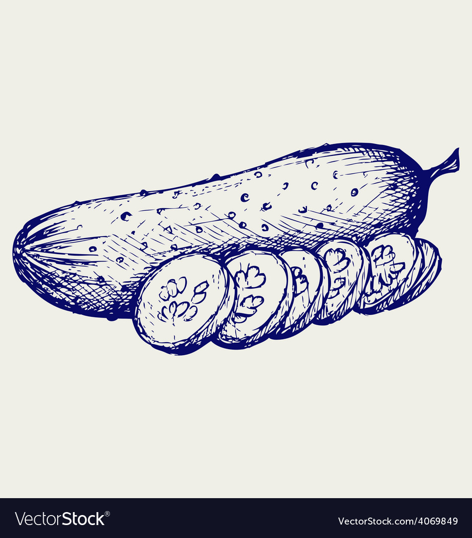 Cucumber and slices vector   Price: 1 Credit (USD $1)