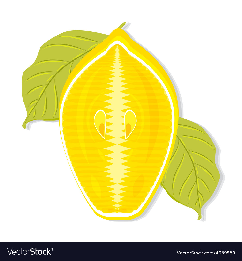 Half a lemon cut along vector | Price: 1 Credit (USD $1)