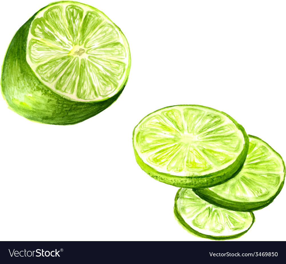 Half of lime vector | Price: 1 Credit (USD $1)