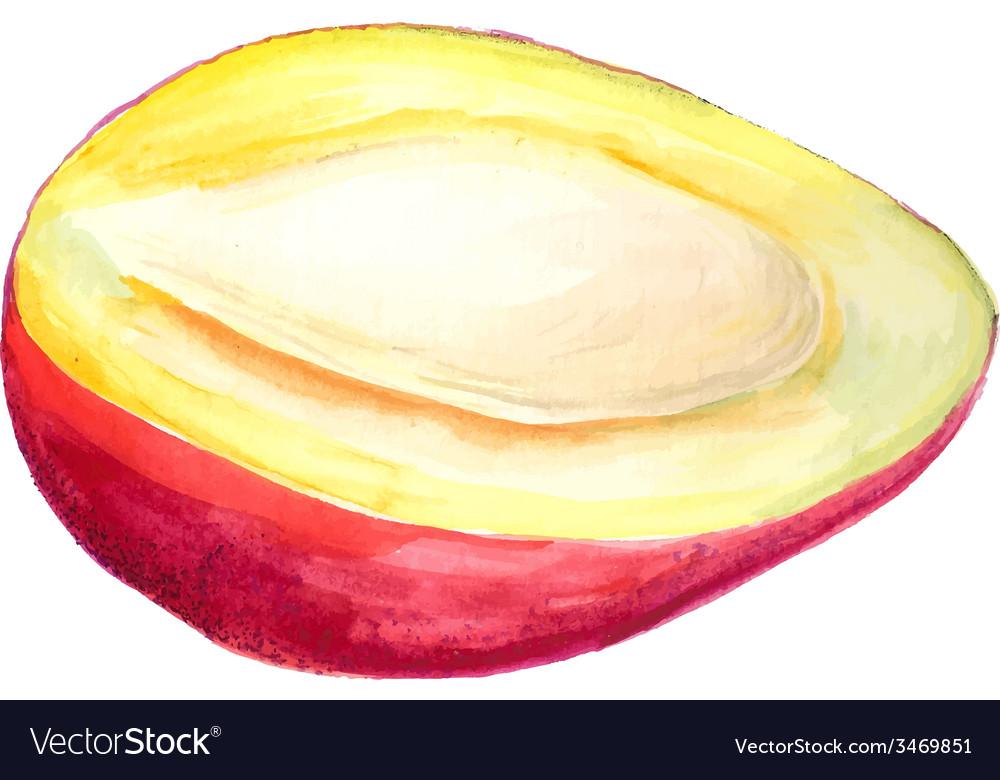Half of mango vector | Price: 1 Credit (USD $1)