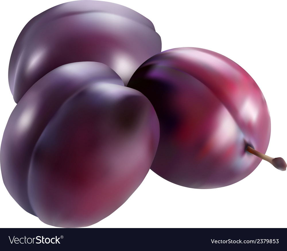 3plum vector | Price: 1 Credit (USD $1)