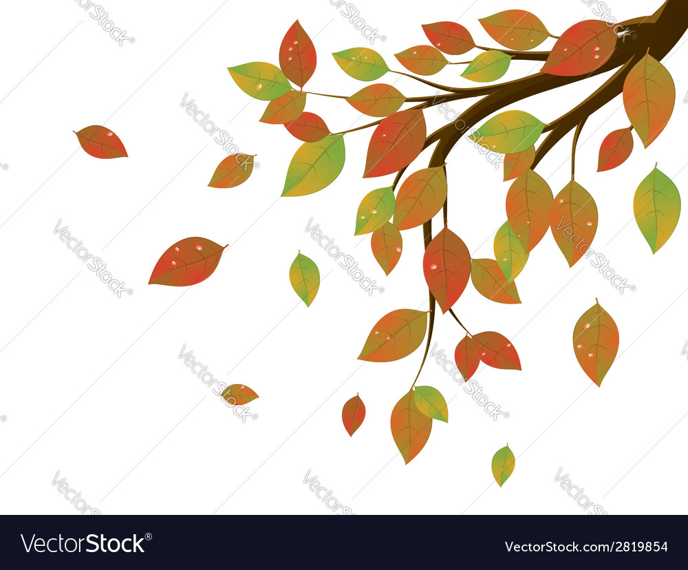 Fall leaves on branch3 vector | Price: 1 Credit (USD $1)