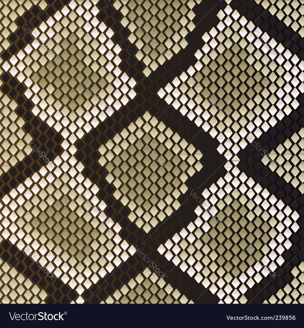 Snake skin vector | Price: 1 Credit (USD $1)