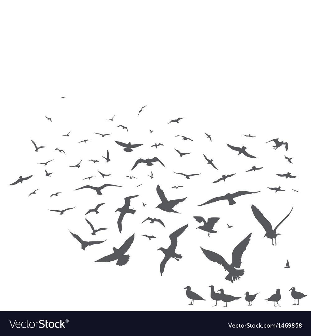 Seagulls vector | Price: 1 Credit (USD $1)