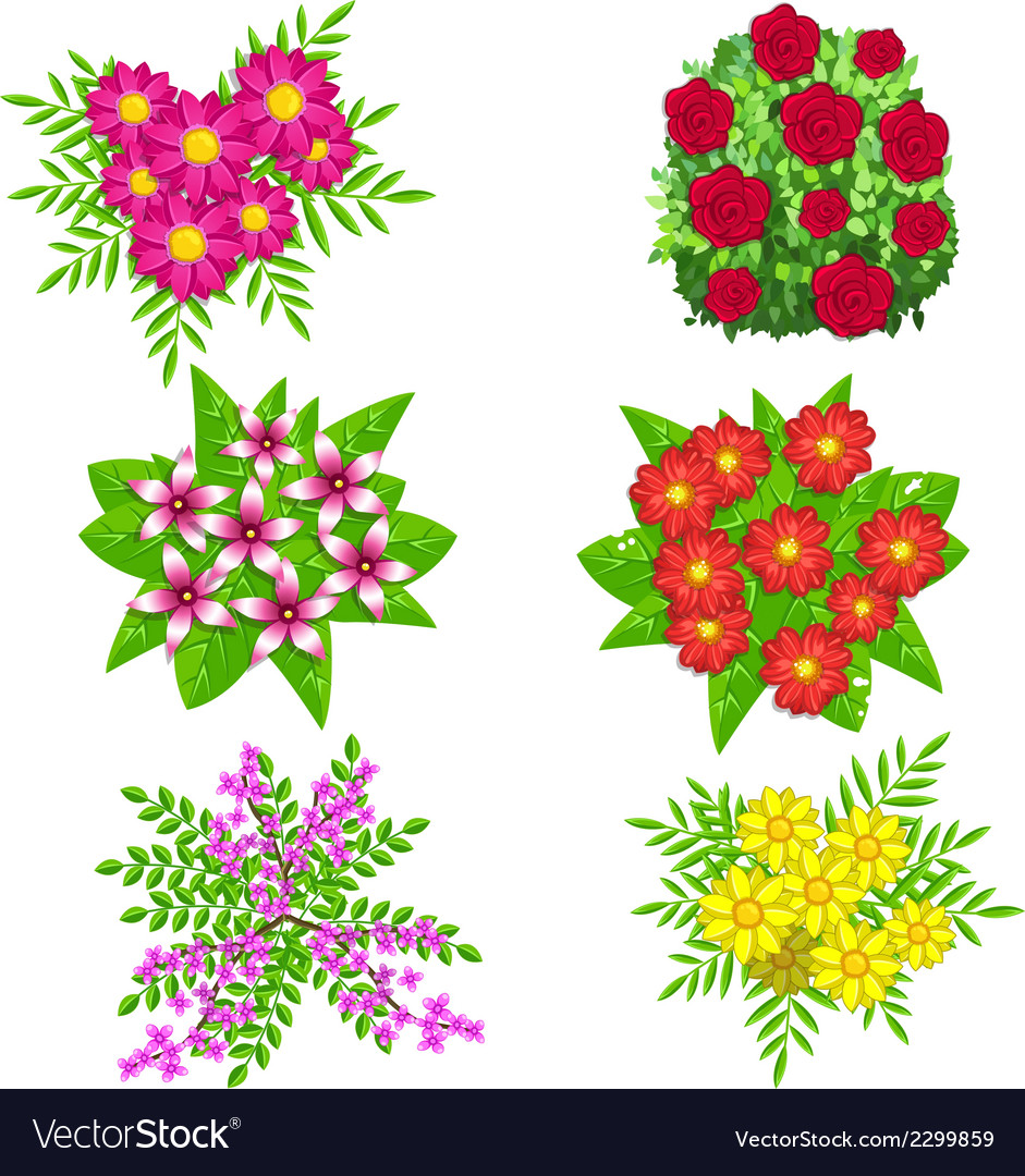 Flowers isolated on white background vector | Price: 1 Credit (USD $1)