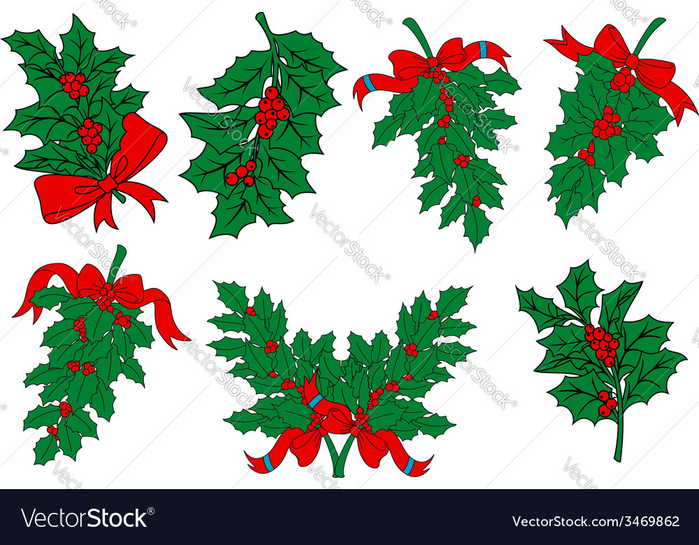 Christmas greens and holly berry branches vector | Price: 1 Credit (USD $1)