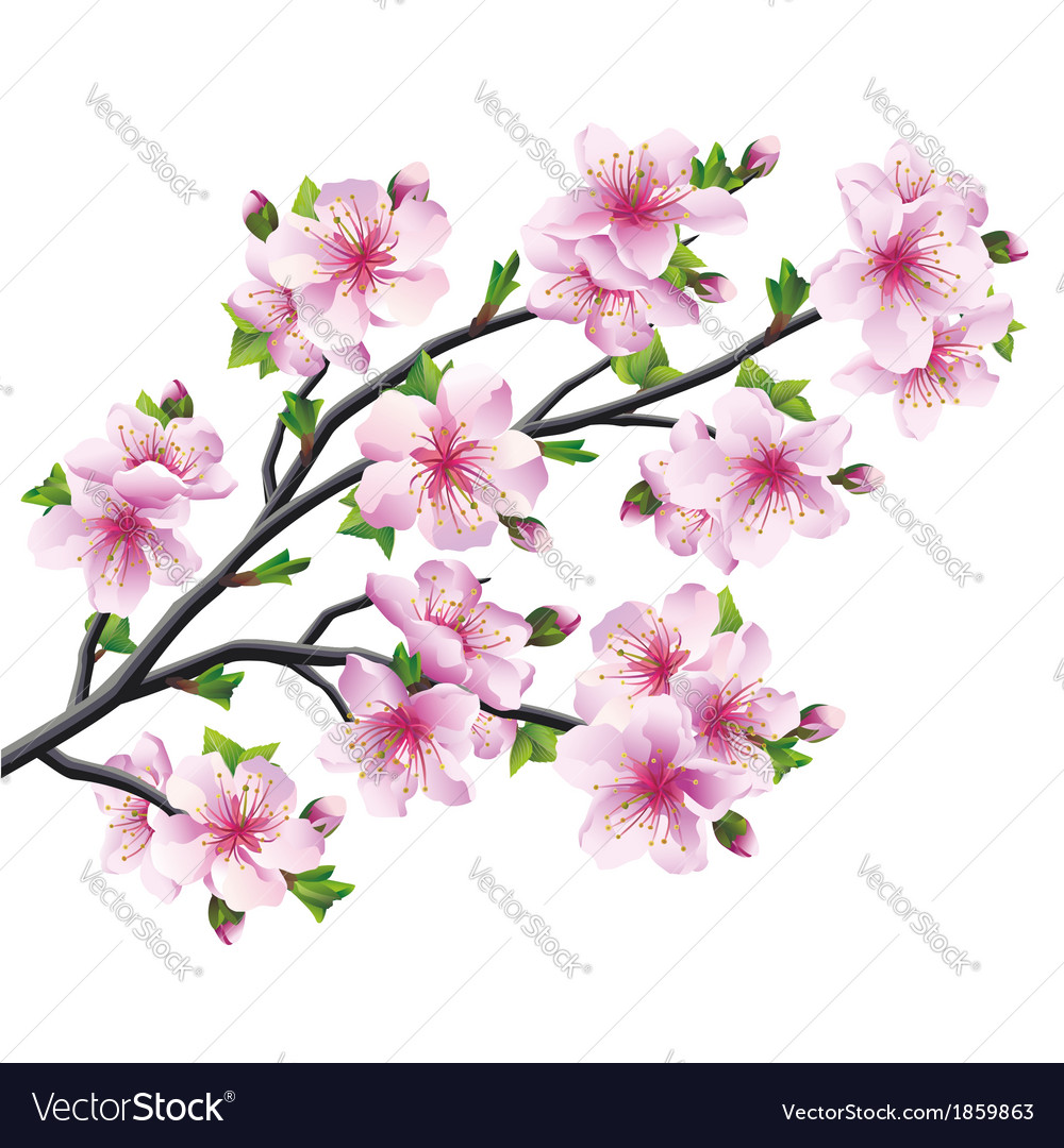 Japanese tree sakura cherry blossom vector | Price: 1 Credit (USD $1)