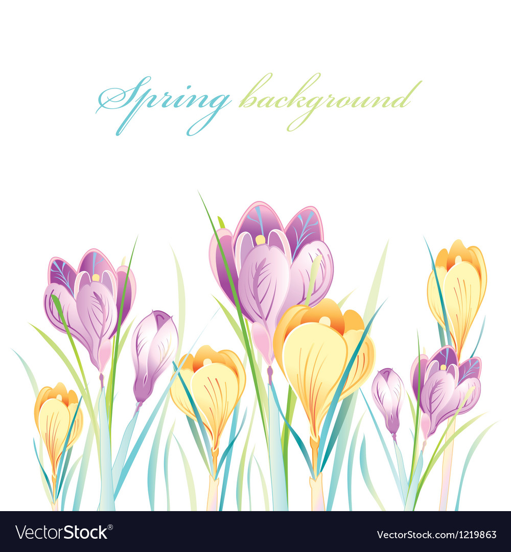 Spring background with crocuses vector | Price: 1 Credit (USD $1)