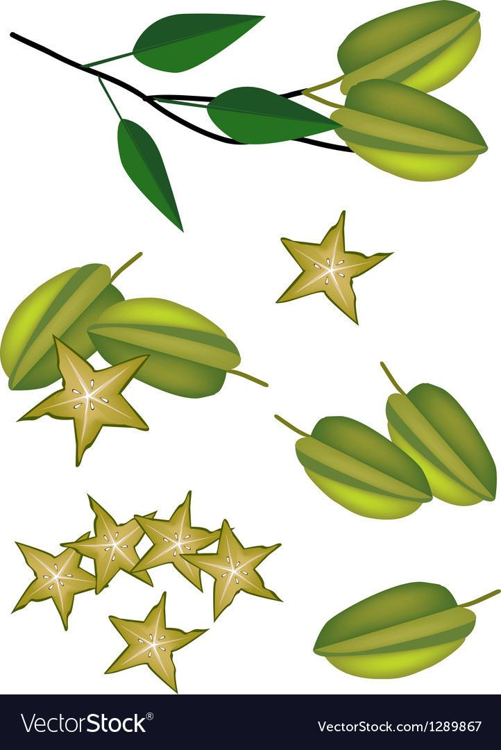 A set of delicious fresh green carambolas vector | Price: 1 Credit (USD $1)