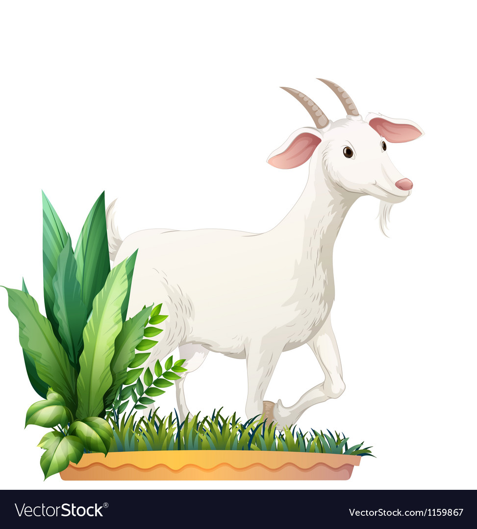 A white goat vector | Price: 1 Credit (USD $1)