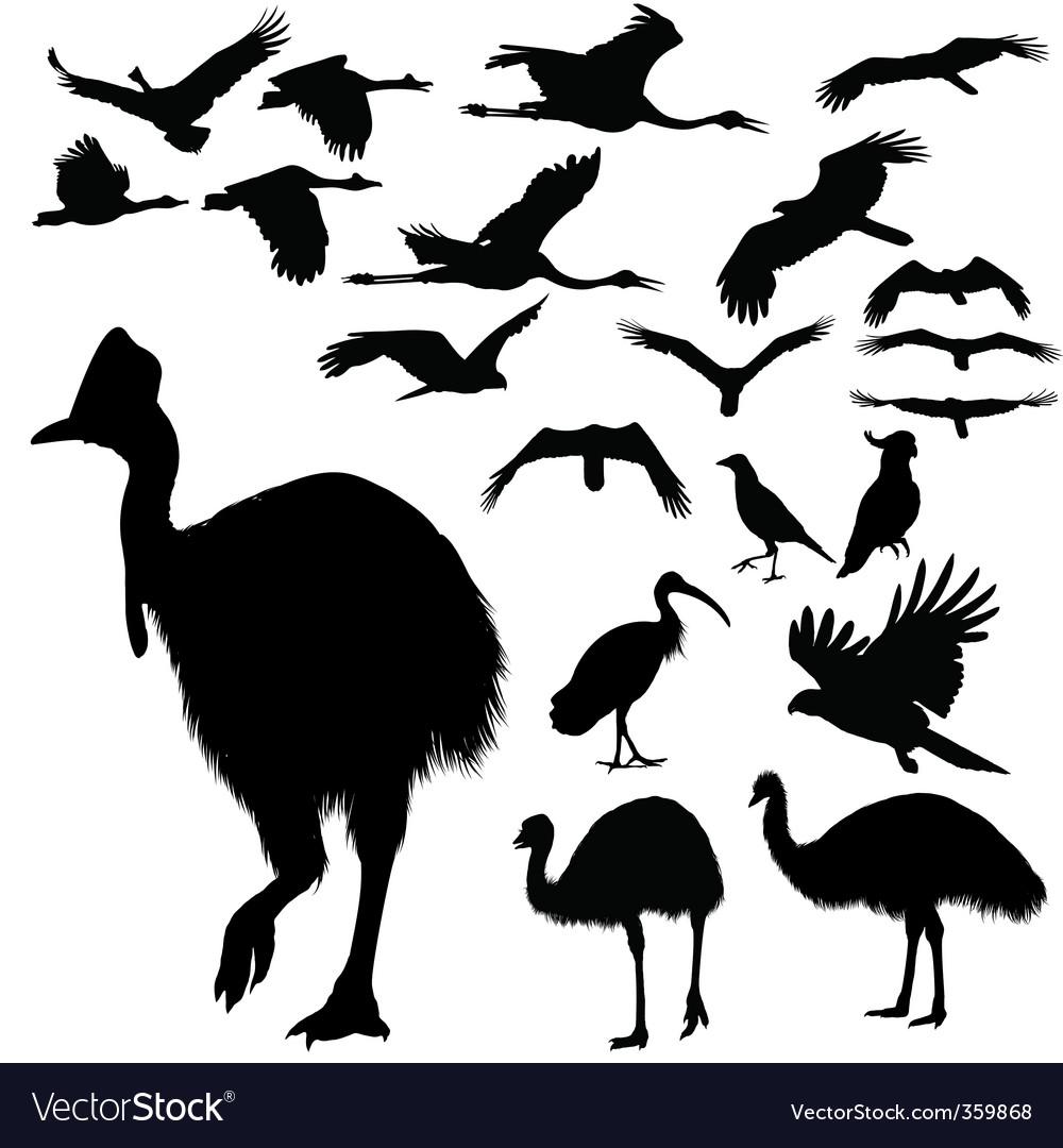 Australian birds silhouettes vector   Price: 1 Credit (USD $1)