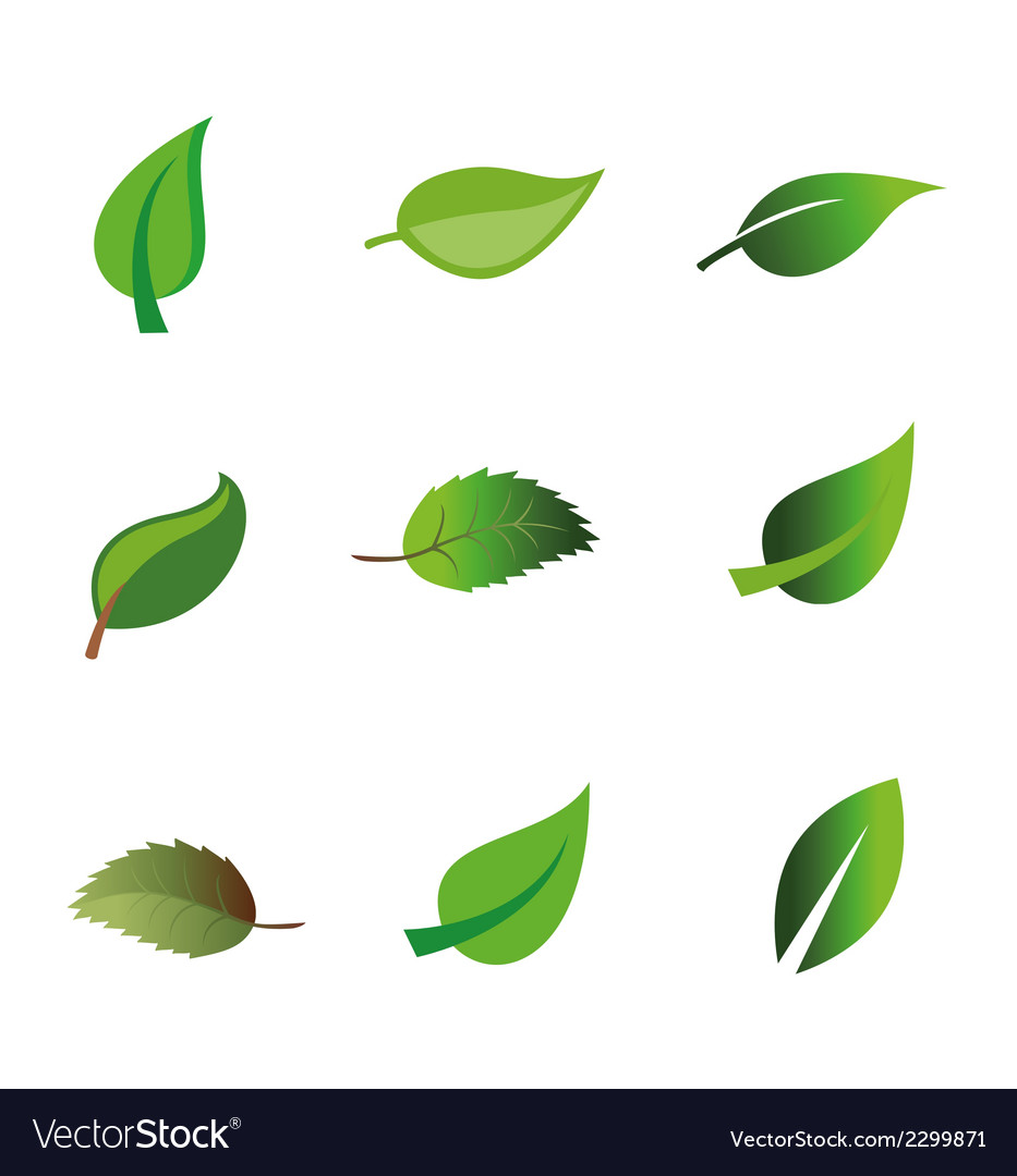 Leaf icon vector | Price: 1 Credit (USD $1)