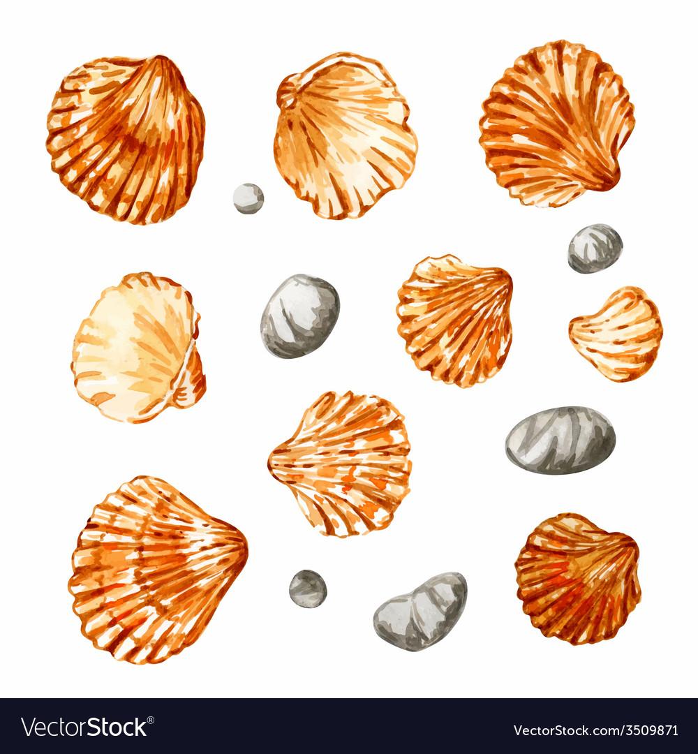 Set of seashells vector | Price: 1 Credit (USD $1)
