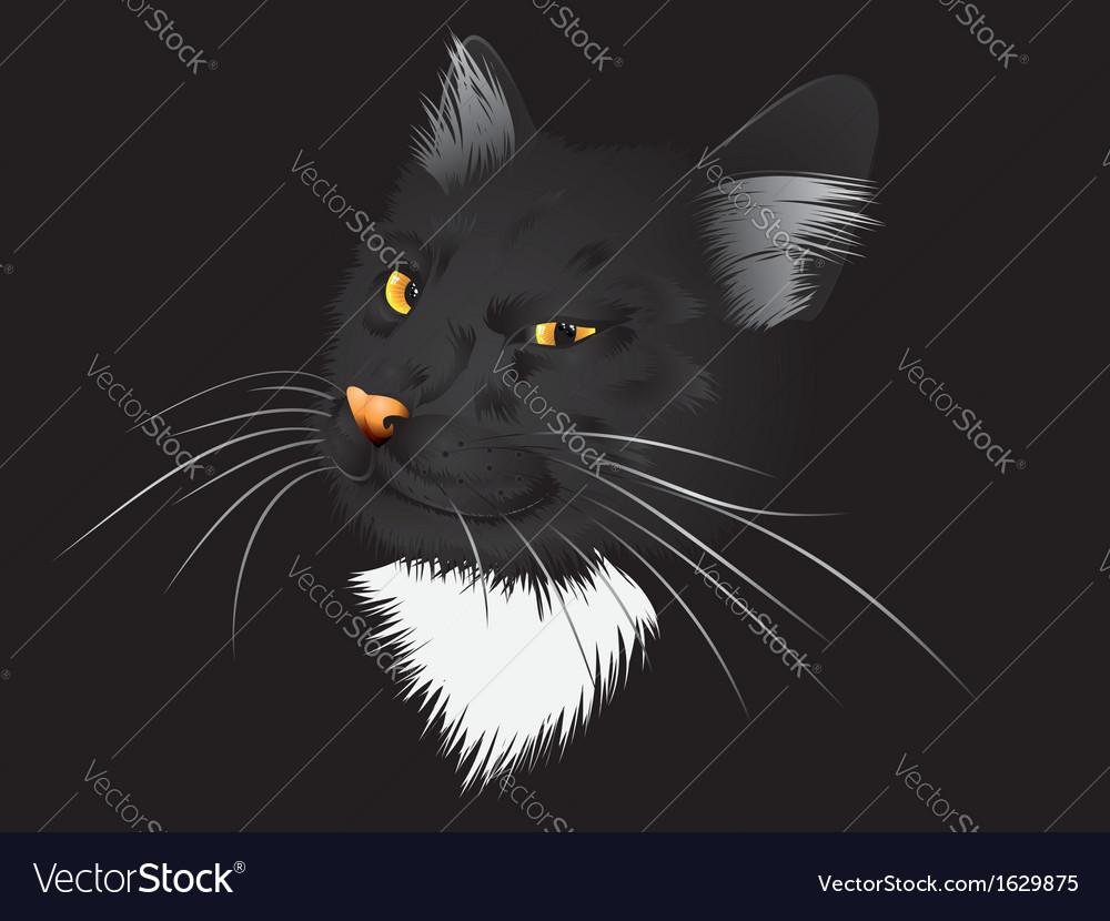 Black cat in the dark vector | Price: 1 Credit (USD $1)