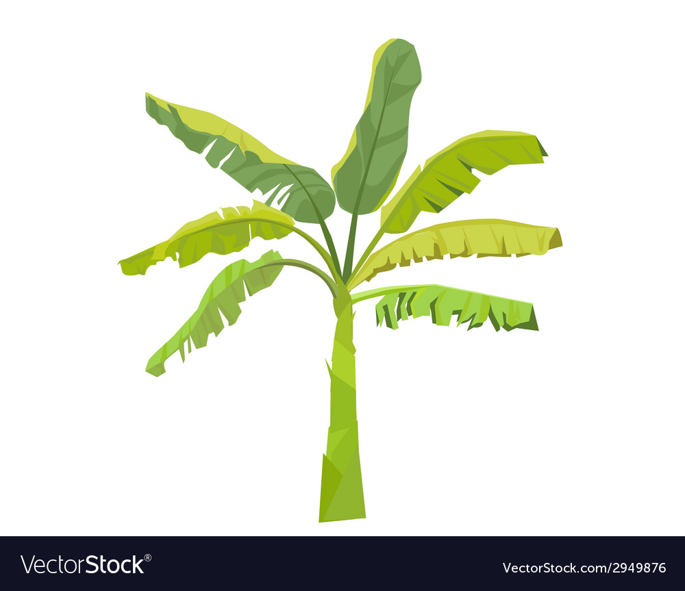 Banana tree vector | Price: 1 Credit (USD $1)